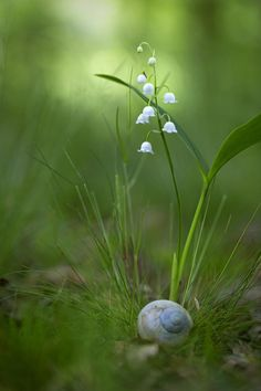 snail shell and lily of the valley