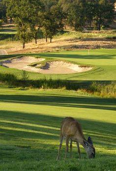 Even the wildlife is enjoying the green at the Darkhorse Golf Club in Auburn I Rock Bottom Golf #rockbottomgolf