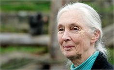 A Conversation With Jane Goodall - 50 Years of Chimpanzees - NYTimes.com