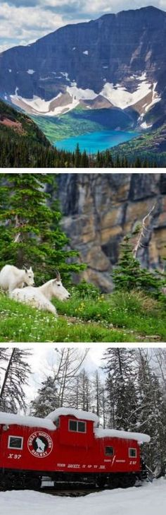 Cool hidden gems of Glacier National Park! I never knew you could pick berries!