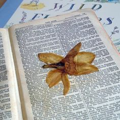 The Pressed Flower Project. Pressed flowers in my bible.