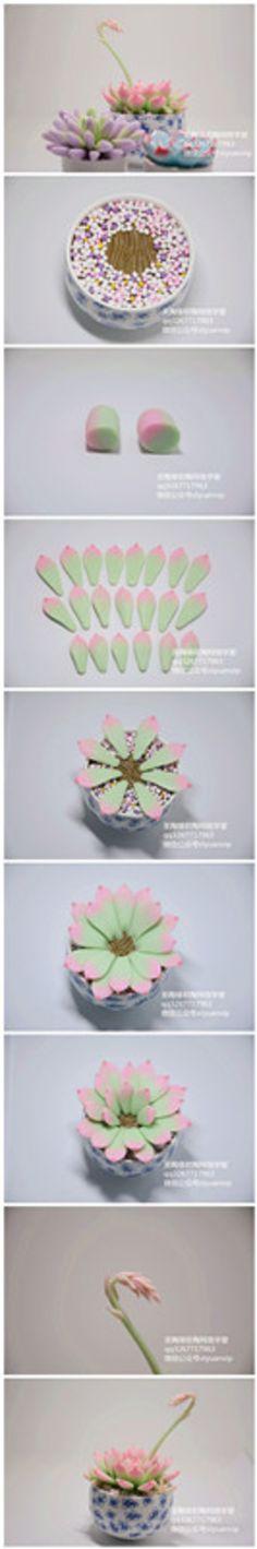 软陶女雏景天科石莲花属多肉植物,更多详细…-堆糖,美好生活研究所