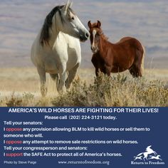 Return To Freedom – RTF rips Advisory Board for urging BLM to kill thousands of wild horses