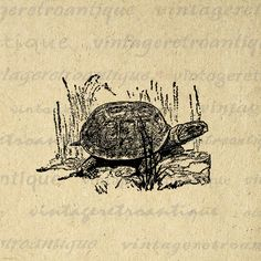 Digital Image Turtle Antique Download by VintageRetroAntique