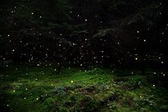 Artist's cosmic forest images evoke a mysterious consciousness : TreeHugger