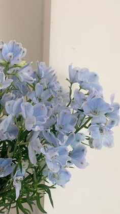 Light Blue Aesthetic, Blue Aesthetic Pastel, Plant Aesthetic, Nature Aesthetic, Aesthetic Colors, Flower Aesthetic, Aesthetic Pictures, Aesthetic Iphone Wallpaper, Aesthetic Wallpapers