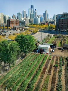 Chicago City Farm. Click for full story via Grist and visit the Slow Ottawa 'Grow It' board for more urban farming.