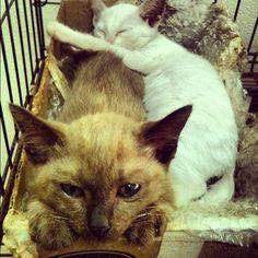 ดูแมวทำ - @zephyrsz- #webstagram