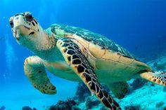 Turtle Island in Nusa Dua Bali | Balitodays.com