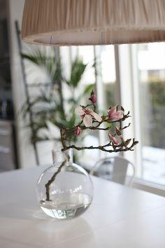 Magnolia-20160301_3942