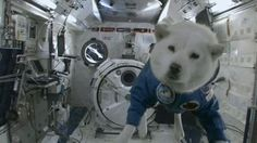 Dog in space ▶GIF