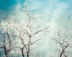 Winter Landscape, Trees, Hoar Frost, Ice, Aqua, Blue, White, Shabby Chic, Nature, Contemporary, Bedroom Wall Decor, Living Room Decor - pinned by pin4etsy.com