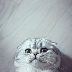 De beste selfietip: wees gewoon jezelf, zoals deze kat | newsmonkey