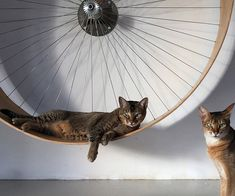 Keep your kitty in shape and entertained by installing this cat exercise wheel in your humble abode. Designed to be mounted onto the wall for maximum space efficiency, it will help keep your cat in tip top mental and physical condition.