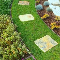 Better Than Grass – The Best Drought-Tolerant Grass Alternative Available