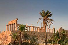 32 Palmyra Palme Bilder und Fotos - Getty Images