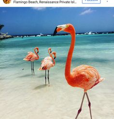Flamingo Beach -- Renaissance Island, Aruba