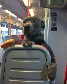 I would feel safe on public transportation if he were a passenger.
