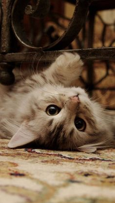 cat wallpaper Cats wallpaper iphone kittens 45 Ideas for 2019 Wallpaper Gatos, Funny Cat Wallpaper, Cute Cat Wallpaper, Iphone Wallpaper Cat, Mobile Wallpaper, Handy Wallpaper, Iphone Backgrounds, Pastel Wallpaper, Cute Baby Cats