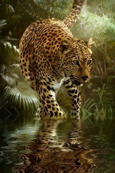 jaguar0ooirereldkdkjdsjhhffpoeerii098re3.jpg