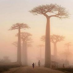Village near baobab alley in Madagascar PC: Bogdan Comenescu