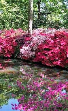 vivid colors at Isabella Plantation in Richmond Park Recycled Garden, Wooden Garden, Glass Garden, English Garden Design, Zen Garden Design, Garden Whimsy, Garden Junk, Beautiful Landscapes, Beautiful Gardens