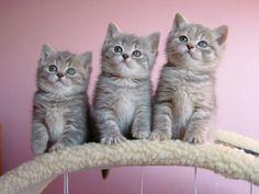 The three little kittens....
