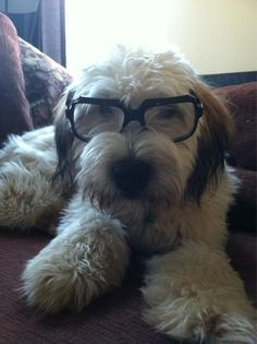 Sweeney acting like his master. SO ADORABLE!!!!!!!!! -- Josh Groban / josh groban