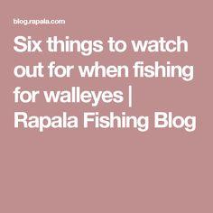 Six things to watch out for when fishing for walleyes Walleye Fishing Tips, Fishing 101, Fishing Tackle Box, Salmon Fishing, Bass Fishing, Australian Bass, Spinner Bait, Fishing Basics, Largemouth Bass