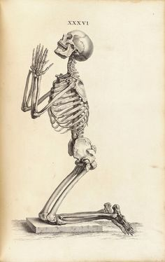 "William Cheselden : ""Side View of a Praying Skeleton"" (Osteographia, 1733) - Giclee Fine Art Print by RenfieldsGarden on Etsy https://www.etsy.com/listing/176570526/william-cheselden-side-view-of-a-praying"