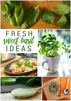 What to do with fresh basil