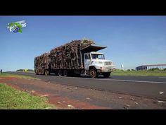 O desenvolvimento de Ribeirão Preto | Oportunidades de Negócios