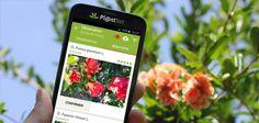 PlantNet - l'app che facilita l'identificazione delle piante