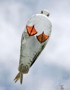 Under bird