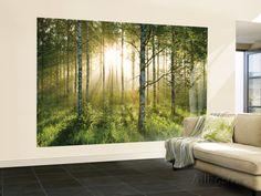 Forest Scene Wallpaper Mural Behangposter bij AllPosters.nl