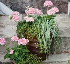 Pink geraniums and angel vine Container Flowers, Flower Planters, Container Plants, Container Gardening, Flower Pots, Garden Yard Ideas, Terrace Garden, Garden Plants, Romantic Flowers