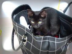 A pocket kitten