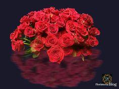 Tipos de rosas rojas en el mundo, los rosales
