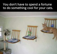 DIY Cat Stuff... Cat shelves from upcycled kitchen chairs. #CatFurniture