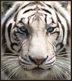 11 Best Animals Of Bhutan Images Animals Animals
