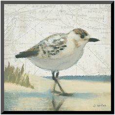Art.com ''Beach Bird I'' Wall Art ($48) ❤ liked on Polyvore featuring home, home decor, wall art, white, bird home decor, beach scene wall art, bird wall art, white wall art and beach wall art