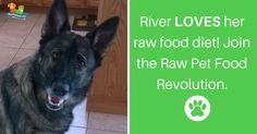 Have you started feeding your pet a raw food diet? #rawisbest #rawdogfood #rawpetfood https://www.rawpetfood.com/