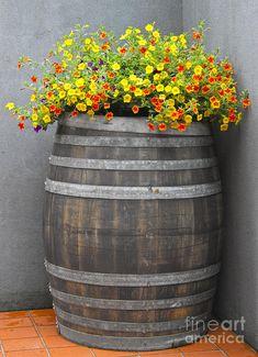 Wine Barrel Planter Photograph  - Wine Barrel Planter Fine Art Print