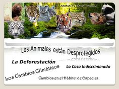 animales en peligro de extincion - Google Search