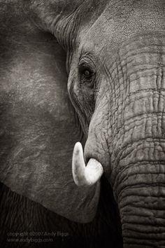 nice photography of elephants