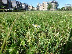 #synchroonkijken19 #35dagen - genoeg ruimte achter ons huis om rustig in 't gras te liggen.