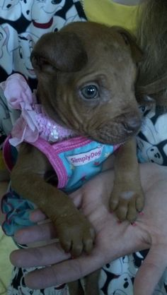 Hannah was born with no knee caps.Read more and please drop by her page -http://www.facebook.com/hannashopefurrever    - and give her some love!