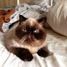 A cat <3