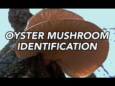 """In the world of foraging, few organisms conjure up fear and mystery more than mushrooms. Tell someone you harvest wild berries, and he thinks to himself what a great hobby. Tell another person you hunt wild mushrooms, and she fears for your life. """"Aren't you scared?"""" """"What if it's poisonous?"""" """"I could never pick wild…"""