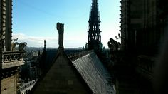 The rooftop of Notre Dame
